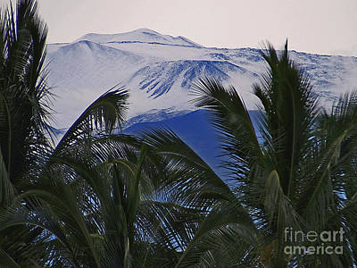 Photograph - Big Island Palms And Snow by Bette Phelan