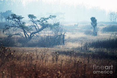 Big Meadows In Winter Art Print by Thomas R Fletcher