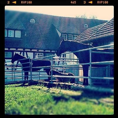 Pferd Wall Art - Photograph - Big, Mini, Big ;) by Malte Bauer