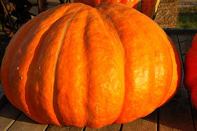 Squash Photograph - Big Orange Pumpkin by LeeAnn McLaneGoetz McLaneGoetzStudioLLCcom