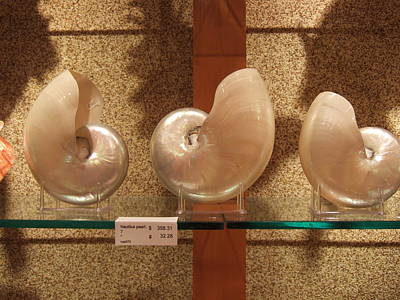 Photograph - Big Shells by Andrei Fried