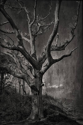 Photograph - Big Talbot Island by Mario Celzner