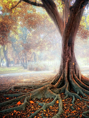 Big Tree Root Art Print by Zu Sanchez Photography