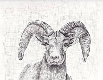 Drawing - Bighorn Sheep by Nicole Grattan