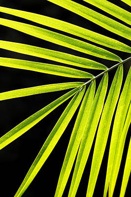 Photograph - Bight Green Tropical Plant by MakenaStockMedia - Printscapes