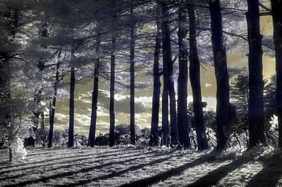 Infrared Photograph - Bike Posts by Joann Vitali