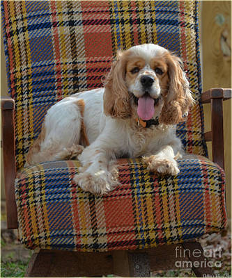 Photograph - Bingo And His Chair by Debbie Portwood