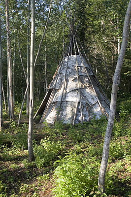Birch Bark Teepee In The Woods Art Print