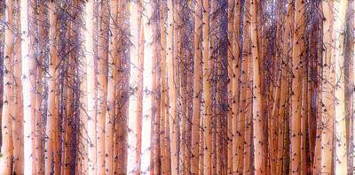 Photograph - Birch Gathering  by Thomas Born