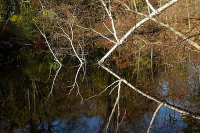 Photograph - Birch Lake Reflections by LeeAnn McLaneGoetz McLaneGoetzStudioLLCcom