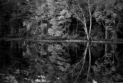 Photograph - Birch Peace by Emily Stauring