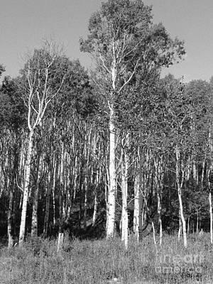 Photograph - Birch Place by David Bearden