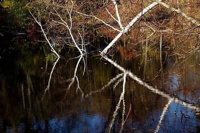 Photograph - Birch Reflections by LeeAnn McLaneGoetz McLaneGoetzStudioLLCcom
