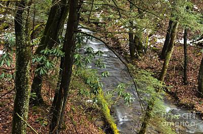 Lovely Lavender - Birch River by Thomas R Fletcher