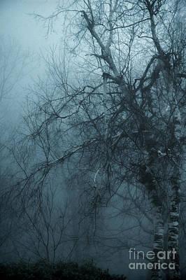 Birch Tree In Fog Print by HD Connelly