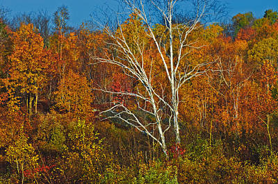Manitoulin Photograph - Birch Tree Surrounded By Colorful by Mike Grandmailson