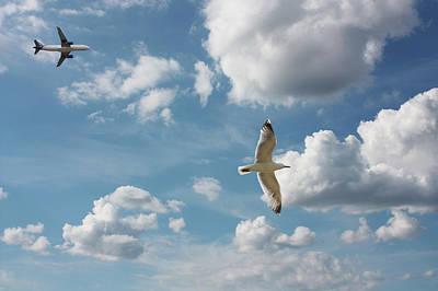 Bird And Flight Agaisnt Sky Art Print by Fahid Chowdhury