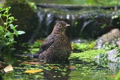 Photograph - Bird Bath by Ed Lukas