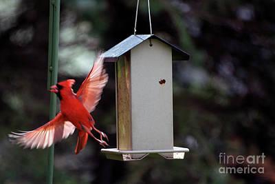 Tom Woolworth Digital Art - Bird Feeder 01 by Thomas Woolworth