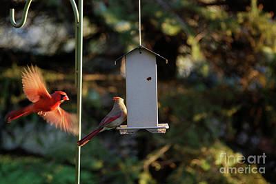 Tom Woolworth Digital Art - Bird Feeder 02 by Thomas Woolworth