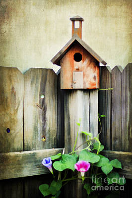 Bird Haven Art Print by Darren Fisher