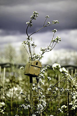 Flower Blooms Photograph - Bird House by Joana Kruse
