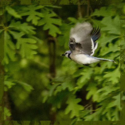 Photograph - Bird In Flight by Shelley Bain