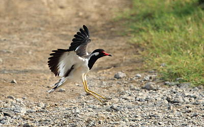 Bird Landing Original