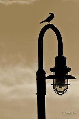 Shem Creek Photograph - Bird Light by Melissa Wyatt