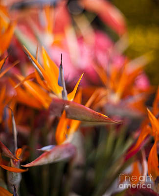 Animals Photos - Bird of Paradise Amongst Friends by Mike Reid