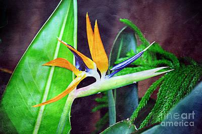 Strelitzia Mixed Media - Bird Of Paradise by Andee Design