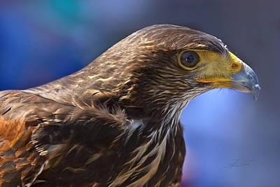 Photograph - Bird Of Prey by Barbara  White