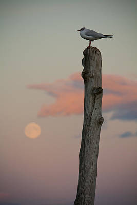 Photograph - Bird On A Pole by Anthony Doudt