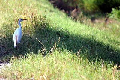 Photograph - Bird On A Slope by Rdr Creative