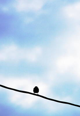 Bird  On A Wire Art Print by Ed Bricker