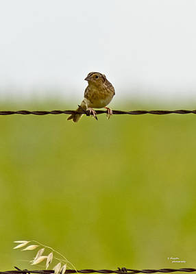 Bird On A Wire Art Print by Teresa Dixon