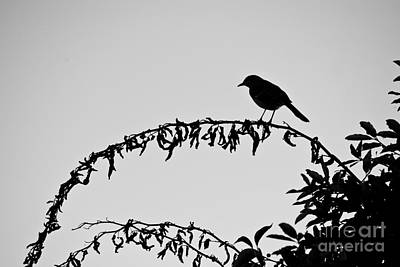 Photograph - Bird On Branch by David Gordon