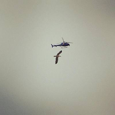Helicopter Photograph - Bird Racing Helicopter :) by Saul Jesse Beas
