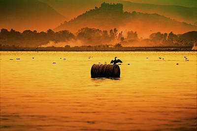 Focus On Background Photograph - Bird Sitting On Drum by Pushp Deep Pandey / 2kPhotography