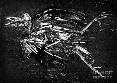 Bird Skeleton Photograph - Bird Skeleton by Susan Isakson