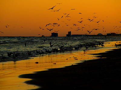 Photograph - Bird Sunset II by James Granberry