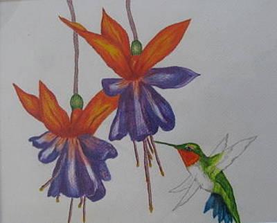 Fushia Drawing - Birdfeeders by Fran Haas
