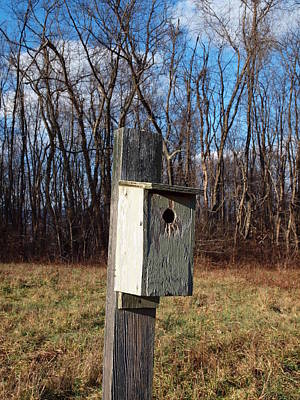 Photograph - Birdhouse On A Pole by Robert Margetts