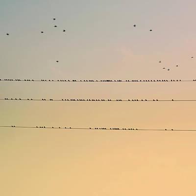 Of Birds Photograph - Birds by Albert Mollon