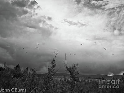 Birds At Mono Lake Art Print