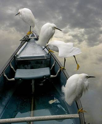 Birds Boat And Beyond Art Print by Henry Murray