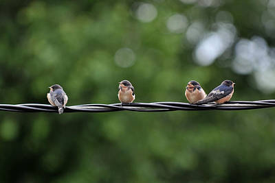Photograph - Birds  by Dragan Kudjerski