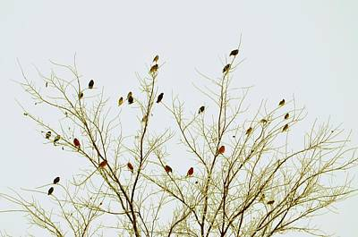 Flock Of Bird Photograph - Birds by E Murray