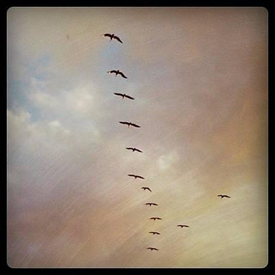 Photograph - Birds by Emily W