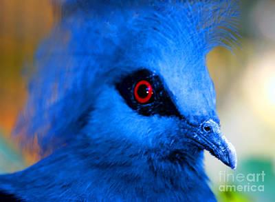 Bird's Eye View Art Print by Tap On Photo
